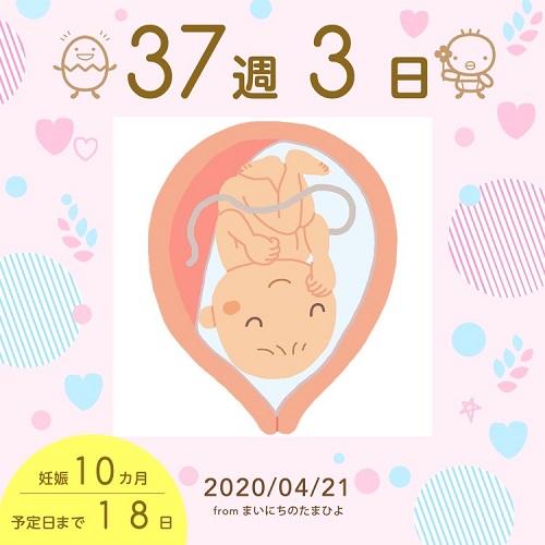 妊婦アプリ